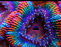 CORALS - Jewels Of The Ocean