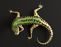 3D Green Lizard- Podarcis Sicula