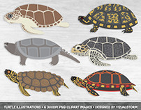 Turtle Illustration Set