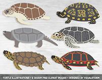 Turtle Illustration Set