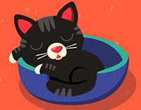 Kotek Staś