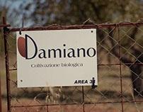 Damiano short