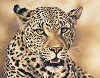 Wildlife Art by Belinda Marshall