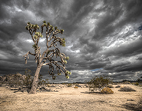 Desert Tree - 7 backplates / 1 HDRI