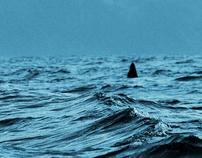 whale Sea
