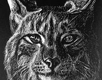 Linx Illustration