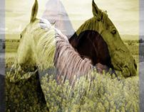 merge horses