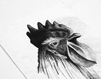 Rooster Watercolours and Drawings