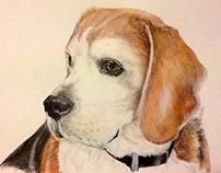 Pet portraits (dogs)