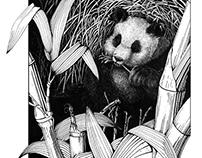 Panda in Habitat