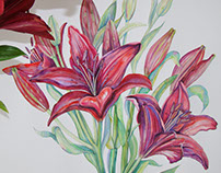 Lily watercolor illustration
