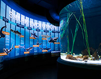 Shark Exhibit Wall Graphics