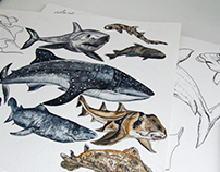 Shark illustrations for ARTE magazine 01/16