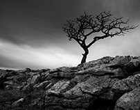 Tree @ Malham Cove