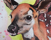 Deer.