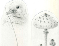 Mushrooms and Dove drawing