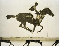 Muybridge Horse Study
