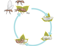 Technical Illustration-Insects and Spiders