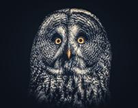 Owl Joe