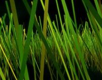 2007 OPACITY 101 GRASS