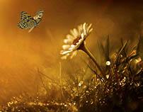 Delicate Nature Mix