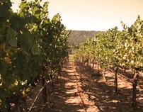eCommerce Development: Chronicle Winery