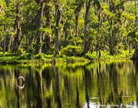 Wakulla Springs In June