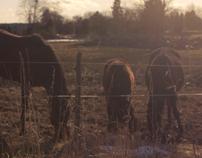 Film: Ovanby