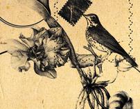 Nightingale messenger