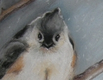 Another tufted titmouse! Because they're awesome!