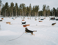 Sled dog inFinland|芬蘭的雪橇犬