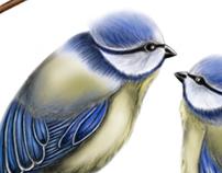 Drawing / Birds