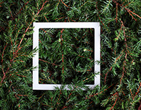 Coniferous trend background. Juniper with white frame.