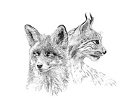 Mural & Canvas Collection 'Animals' for Onwall.eu