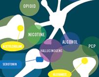 Your Brain & Addiction