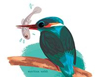 Birds Calendar 2017