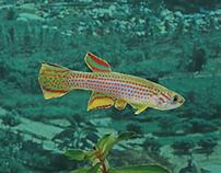 Jonestown Aquarium