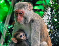Silver Springs State Park, Florida - Monkeys!