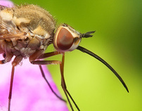 Amazing Diptera!