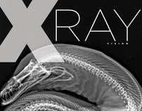 X-Ray Vision—Fish Inside Out | Posters