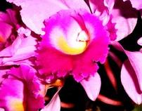 Photo-Nature