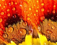 dew flower