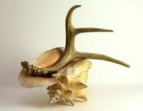 Antler Shell