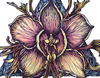 Orchid graphic icon