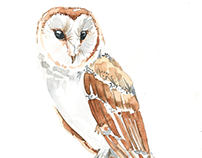 A watercolor Barn Owl