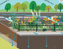 Bioswale Interpretation Illustrations