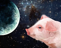 Pigs in Space 3D Camera Movement Motion Graphics Video