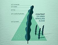 Flat Infographic Design / Spirulina Algae
