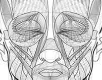 Fibers - illustration