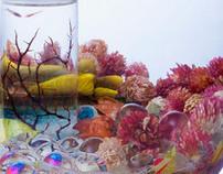 Les crevettes amoureux